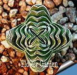 セール!多肉植物の種子Echinopsis tubiflora、サボテンの種、希少な花サボテン、約10個/パック、#5E8E4U