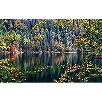 森、木、川、秋、葉 キャンバスの 写真 ポスター 印刷 旅行 風景 景色 - (105cmx70cm)