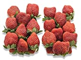 フルーツなかやま 栃木産 とちおとめ いちご 2パック入 糖度10度以上 1粒18g以上