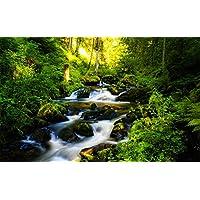 絵画風 壁紙ポスター 森の泉 渓流 水の流れ 湧き水 森林浴 緑 癒し リフレッシュ (はがせるシール式) キャラクロ SNR-021W1 (ワイド版 921mm×576mm) 建築用壁紙+耐候性塗料