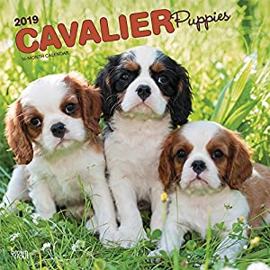 Cavalier Puppies 2019 Calendar