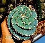 セールジューシー!10Seed /バッグサボテンRebutiaバラエティ開花カラーサボテン希少サボテン種子オフィスミニプラント、#2MH1I6