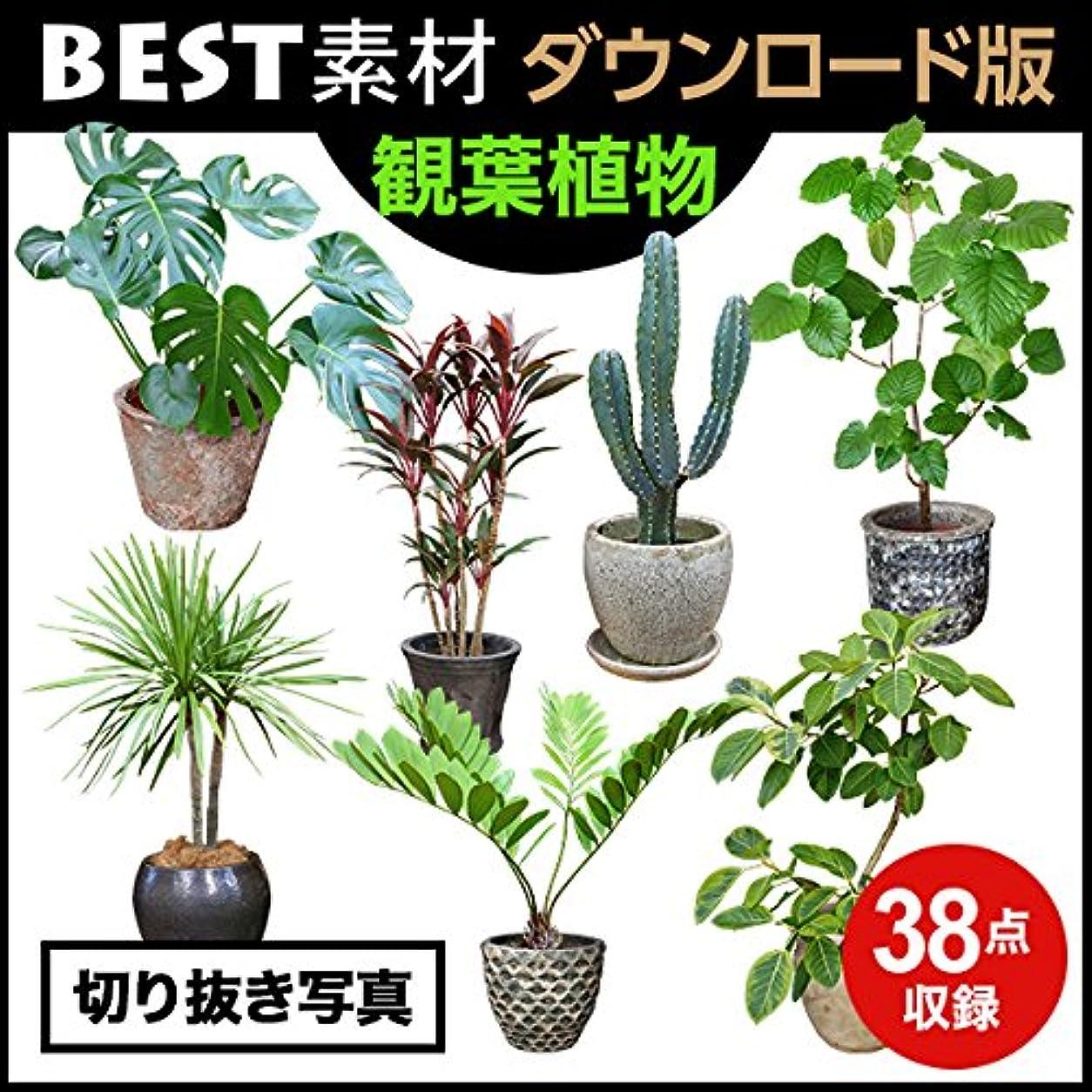 【BEST素材】切り抜き写真_観葉植物|ダウンロード版