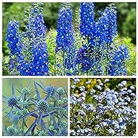 Turquoise Ocean - Seeds of 3 Flowering Plants' Species - 3 Packets of Seeds