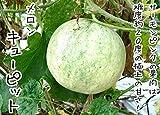 【てしまの苗】接木メロン/キューピット   9cmポット