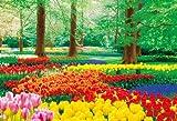 1000ピース 花咲き誇るキューケンホフ公園  (49x72cm)