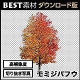 【BEST素材】高解像度の切り抜き写真_モミジバフウ01 [ダウンロード]