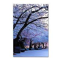 """商標Fineアート12x 19"""" Cherry Blossom Shade 22x32 MZ0369-C2232GG"""