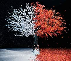 Aimer「everlasting snow」のジャケット画像
