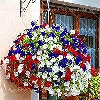 種子-100個/袋掛けPetunia盆栽植物非常に美しい花植物の装飾あなたの庭:2