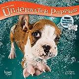 Underwater Puppies 2019 Calendar