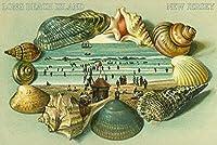 Long Beach Island、New Jersey–風景のビューボーダーに海シェル 24 x 36 Giclee Print LANT-46393-24x36