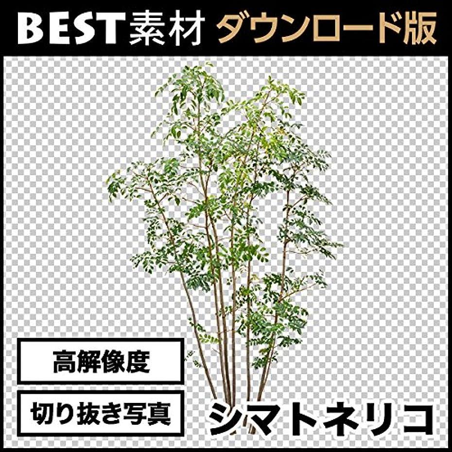 【BEST素材】高解像度の切り抜き写真_シマトネリコ03 [ダウンロード]