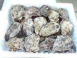 【広島県玖波産】【アミスイ】殻付き牡蠣30個
