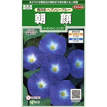 サカタのタネ 実咲花6026 朝顔 西洋系ヘブンリーブルー 00906026