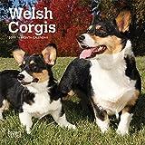 Welsh Corgis 2019 Calendar