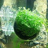 eeldog アクアリウム インテリア 水槽 レイアウト 熱帯魚 (スカイガーデン 2個)