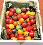 カラフルミニトマトの宝石箱 800g 高知 ファーム輝