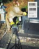 写真ルポ イマドキの野生動物―人間なんて怖くない 画像
