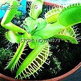 50個の種子/パックイネ科冬虫夏草の種子奇妙な魔法ハエトリグサシード食虫植物種子ハエジゴクMuscipula盆栽
