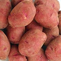 じゃがいも 北海道産 じゃがいも ・ たまねぎ のじゃが玉セットD ( レッドムーン L/2L 5kg 玉ねぎ4kg )ジャガイモとタマネギセット