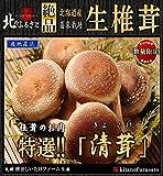 北海道産 生椎茸 肉厚な「清茸」Lサイズ8玉×2 化粧箱入!!