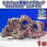 """(海水魚)C.P.Farm 養殖ライブロック""""BaseRock"""" LLサイズ 1個(形状お任せ) 本州・四国限定[生体]"""