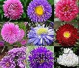 50個の種子、フレンチマリーゴールド(キンセンカ)花の種子、低maintance、あなたの庭に明るい色を追加