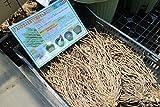 【野菜苗】【まとめ買い】アスパラガス(3年物)生育セット(プランター 底石 培養土セット) 【送料込】