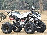 IceBear(アイスベアー) 最新型四輪バギー ATV 50cc 前進3速バック付 ミニカー登録 公道走行可 白 HL50HW