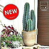 LAND PLANTS 柱サボテン テラコッタ鉢の鉢植え