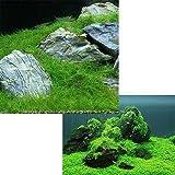 (水草 熱帯魚)前景 水上葉(無農薬)2種セット キューバパールグラス キューブS(1個)+ヘアーグラス ショート(1束分) 本州・四国限定[生体]