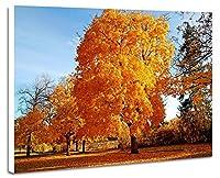 美しい秋の風景、木、森 - (N037) - 自然 風景 壁掛け式の装飾画 印刷の絵 ポスター(30cmx40cmx2.5cm)