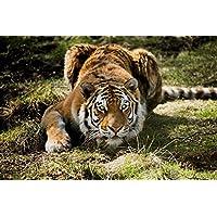 タイガー動物 - #37850 - キャンバス印刷アートポスター 写真 部屋インテリア絵画 ポスター 90cmx60cm