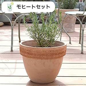 ハーブ栽培セット ( アップルミント & スペアミント )【 モヒート 用】