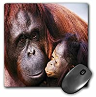 3drose LLC 8x 8x 0.25インチマウスパッド、Orangutan Nベビー( MP _ 53282_ 1)