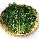 千葉県産 パクチー 生野菜 鮮度保持包装 (200g)