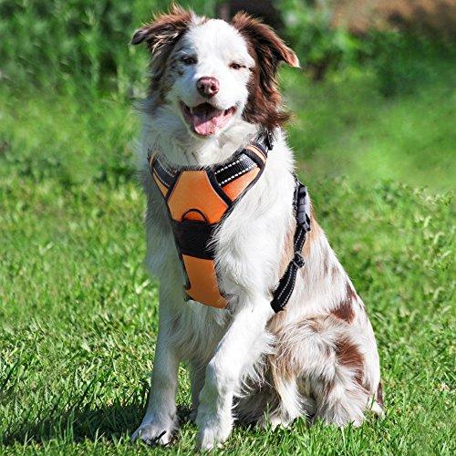 Rabbitgoo 犬 ハーネス 大型犬18-34KG 胴輪 ソフト 首輪 リード 簡単着脱 調節可能 歩行補助 引っ張り防止 咳き込み軽減 散歩 出かけ用 反射材 ハンドル付き 安全 通気 (オレンジ)