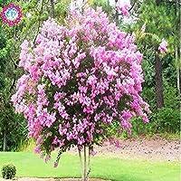 スワンズグリーン2:100個/バッグGaint Red&Violet Bonsai Crapeマートルツリーの種子花の種子、多年草のブッシュの苗木盆栽の庭Lagerstroemiaの種子2