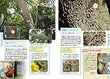 虫のしわざ観察ガイド—野山で見つかる食痕・産卵痕・巣 画像