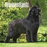Newfoundlands 2018 Calendar