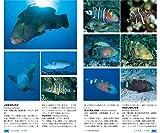 山溪ハンディ図鑑 改訂版 日本の海水魚 画像