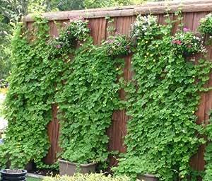 eco&ecoウインプランター深55型ゴーヤ栽培緑のカーテンセット