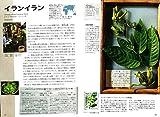 調香師が語る香料植物の図鑑 画像