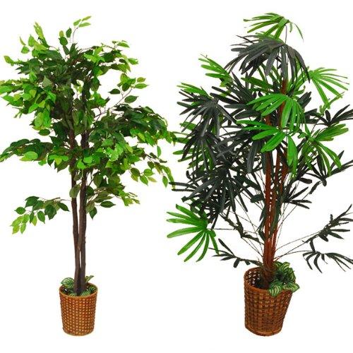 観葉植物2本セット