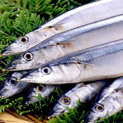 根室産秋刀魚 合計10kg(約80尾入)冷凍品