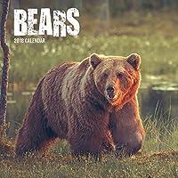 Bears 2018 Wall Calendar [並行輸入品]