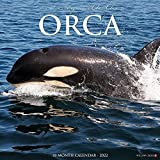 Orca (Journey With The) 2022 Wall Calendar