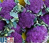 1200種:USA売り手フレンチパープルブロッコリー100から1200個の種子家宝NON GMO