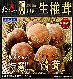 北海道産 生椎茸 肉厚な「清茸」 Mサイズ10玉×2 化粧箱入!! 大自然の北海道、ミネラル含んだ地下水で育てられた生椎茸「清茸」
